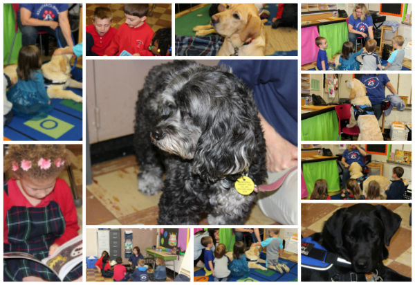 assistance dogs read2017